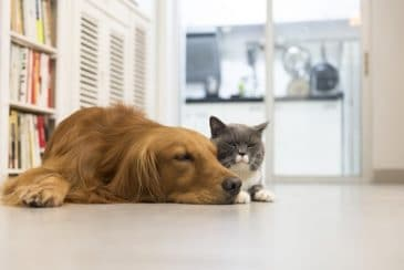 cat and dog dander