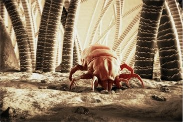 dust mites in your home